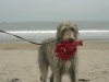 fergus-and-lobster-5-gallery